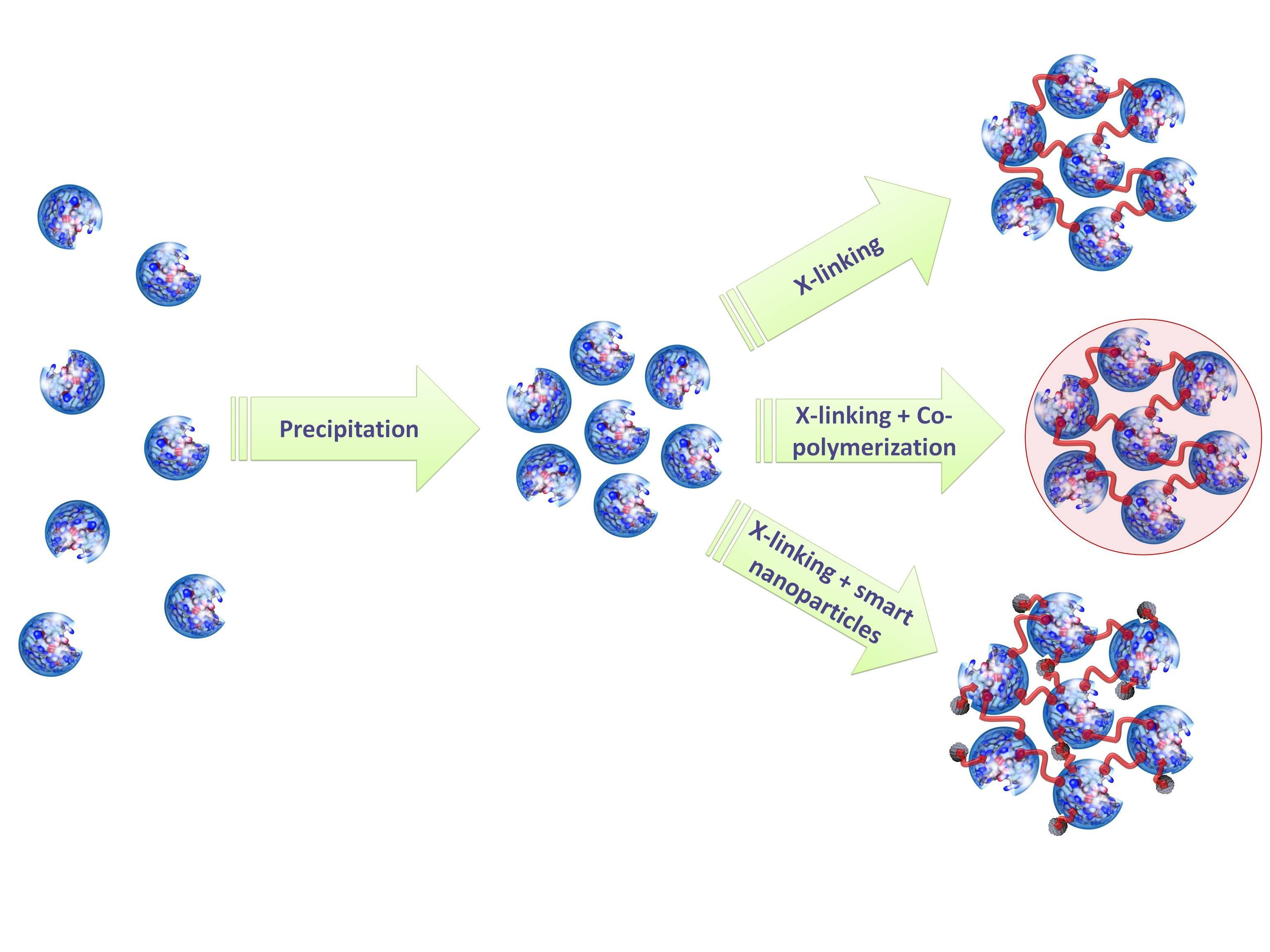 enzyme immobilization Enzymes are the prime factors regulating physiology of plants and animals enzyme immobilization is one technique to isolate desired enzyme for health care.